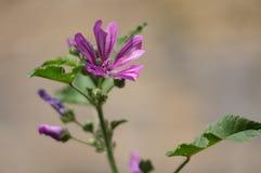 Όμορφο λεπτό άγριο λουλούδι σε ένα πράσινο θολωμένο υπόβαθρο Στοκ Φωτογραφίες