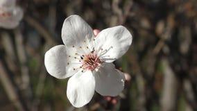 όμορφο λευκό λουλουδιών απόθεμα βίντεο