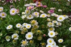 όμορφο λευκό λουλουδιών Στοκ Εικόνες