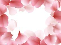 Όμορφο ελαφρύ σχέδιο πλαισίων άνοιξη με τα ρόδινα πετώντας πέταλα του sakura - ιαπωνικό δέντρο κερασιών Στοκ Φωτογραφίες