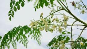 Όμορφο ζωηρόχρωμο λουλούδι Στοκ Εικόνα