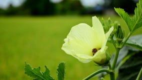 Όμορφο ζωηρόχρωμο λουλούδι Στοκ Εικόνες