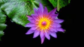 Όμορφο ζωηρόχρωμο λουλούδι Στοκ εικόνα με δικαίωμα ελεύθερης χρήσης