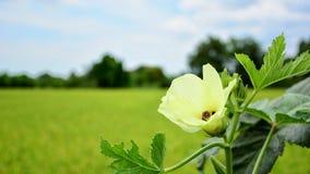 Όμορφο ζωηρόχρωμο λουλούδι Στοκ Φωτογραφία