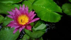 Όμορφο ζωηρόχρωμο λουλούδι Στοκ φωτογραφία με δικαίωμα ελεύθερης χρήσης