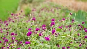 Όμορφο ζωηρόχρωμο λουλούδι Στοκ εικόνες με δικαίωμα ελεύθερης χρήσης