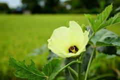 Όμορφο ζωηρόχρωμο λουλούδι Στοκ φωτογραφίες με δικαίωμα ελεύθερης χρήσης