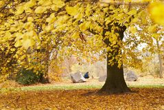 Όμορφο ζωηρόχρωμο πάρκο φθινοπώρου Parc Astrid στοκ εικόνες