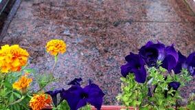 Όμορφο ζωηρόχρωμο πρώτο πλάνο λουλουδιών που κινείται στον αέρα Το νερό ρέει κάτω από τον κόκκινο γρανίτη Ο ουρανός απεικονίζεται απόθεμα βίντεο