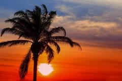 Όμορφο ζωηρόχρωμο τοπίο ηλιοβασιλέματος στο χρόνο λυκόφατος φύσης βραδιού μπλε ουρανού και το δέντρο σκιαγραφιών στοκ εικόνες με δικαίωμα ελεύθερης χρήσης