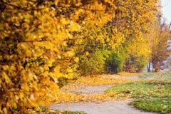 Όμορφο ζωηρόχρωμο τοπίο φθινοπώρου Τοπίο φθινοπώρου με το χρώμα Στοκ φωτογραφία με δικαίωμα ελεύθερης χρήσης