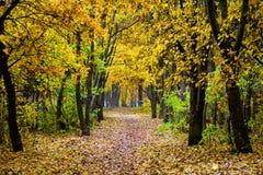 Όμορφο ζωηρόχρωμο τοπίο φθινοπώρου Τοπίο φθινοπώρου με το χρώμα Στοκ εικόνα με δικαίωμα ελεύθερης χρήσης