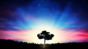 Όμορφο ζωηρόχρωμο τοπίο φύσης σκιαγραφιών δέντρων μοναξιάς ηλιοβασιλέματος ελεύθερη απεικόνιση δικαιώματος