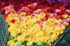 Όμορφο ζωηρόχρωμο υπόβαθρο λουλουδιών Στοκ φωτογραφίες με δικαίωμα ελεύθερης χρήσης