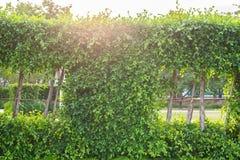 Όμορφο ζωηρό πράσινο φύλλο με την ελαφριά φλόγα Στοκ Φωτογραφία