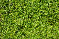 Όμορφο ζωηρό πράσινο φύλλο με την ελαφριά φλόγα Στοκ Εικόνες