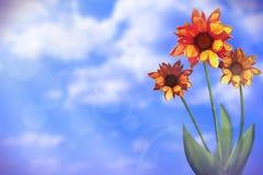 Όμορφο ζωντανό gazania με κενό στο αριστερό στο νεφελώδες υπόβαθρο ουρανού Floral έννοια λουλουδιών άνοιξης ή καλοκαιριού Στοκ φωτογραφία με δικαίωμα ελεύθερης χρήσης