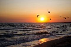 Όμορφο ηλιοβασίλεμα στο κοπάδι παραλιών Α των πουλιών που πετούν πέρα από τη θάλασσα στον ήλιο ρύθμισης Στοκ Φωτογραφία