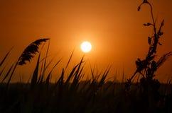 Όμορφο ηλιοβασίλεμα στο λιβάδι στοκ εικόνα
