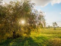 Όμορφο ηλιοβασίλεμα στο πάρκο με την τακτοποιημένη χλόη και λίγα δέντρα στοκ φωτογραφία με δικαίωμα ελεύθερης χρήσης