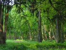 Όμορφο ηλιόλουστο θερινό πάρκο στο τοπίο φωτογραφιών φύσης επαρχίας στοκ φωτογραφία με δικαίωμα ελεύθερης χρήσης