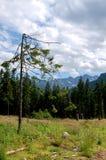 Όμορφο ηλιόλουστο τοπίο βουνών στις διακοπές η ημέρα στοκ εικόνα