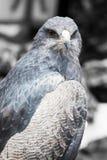 όμορφο θήραμα πουλιών Στοκ Εικόνες