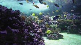 Όμορφο θαλάσσιο ενυδρείο με ένα ζωηρόχρωμο βίντεο μήκους σε πόδηα αποθεμάτων ψαριών φιλμ μικρού μήκους