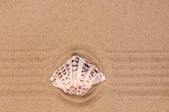 Όμορφο θαλασσινό κοχύλι που βρίσκεται στο κέντρο ενός κύκλου φιαγμένου από άμμο Στοκ εικόνα με δικαίωμα ελεύθερης χρήσης