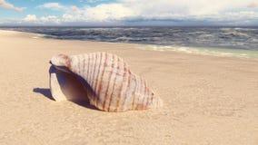 Όμορφο θαλασσινό κοχύλι σε μια αμμώδη παραλία, που πλένεται από το ωκεάνιο κύμα Όμορφη τρισδιάστατη ζωτικότητα βρόχων απόθεμα βίντεο