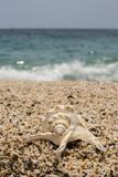 όμορφο θαλασσινό κοχύλι στη μικρή παραλία χαλικιών Στοκ εικόνα με δικαίωμα ελεύθερης χρήσης
