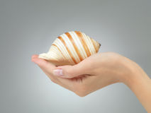 Όμορφο θαλασσινό κοχύλι στο θηλυκό χέρι Στοκ Φωτογραφίες