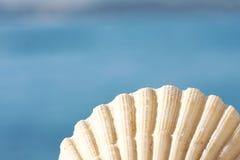 όμορφο θαλασσινό κοχύλι Στοκ Εικόνες