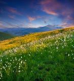 όμορφο θερινό ηλιοβασίλεμα στοκ φωτογραφίες με δικαίωμα ελεύθερης χρήσης