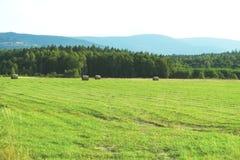 Όμορφο θερινό τοπίο ενός πράσινου τομέα σε ένα κλίμα των μπλε βουνών, δέματα του σανού, ένα αγροτικό τοπίο, ένα αγρόκτημα στοκ φωτογραφία με δικαίωμα ελεύθερης χρήσης