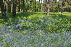 Όμορφο θερινό τοπίο με τα μπλε λουλούδια στο πάρκο Στοκ Φωτογραφία