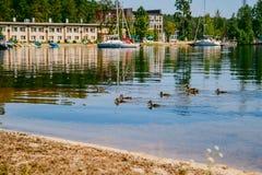 Όμορφο θερινό τοπίο με την άποψη λιμνών, θέρετρο χωρών, ηρεμία, θερινή ημέρα Ένα κοπάδι των παπιών που επιπλέουν σε μια σαφή λίμν Στοκ Φωτογραφίες