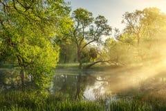 Όμορφο θερινό τοπίο των πράσινων δέντρων κατά μήκος των γραφικών όχθεων του ποταμού στο ηλιόλουστο πρωί ακτίνες του φωτός του ήλι Στοκ Φωτογραφία