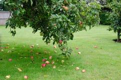 όμορφο διάνυσμα δέντρων απεικόνισης μήλων Στοκ φωτογραφίες με δικαίωμα ελεύθερης χρήσης
