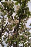 όμορφο διάνυσμα δέντρων απεικόνισης μήλων Στοκ εικόνες με δικαίωμα ελεύθερης χρήσης
