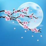 όμορφο διάνυσμα sakura απεικόνισης κλάδων στοκ εικόνες με δικαίωμα ελεύθερης χρήσης