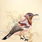 Όμορφο διανυσματικό υπόβαθρο με συρμένο το χέρι διανυσματικό ζωηρόχρωμο πουλί Στοκ Φωτογραφία
