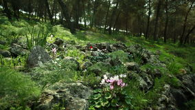 Όμορφο λιβάδι με τη χλόη και τα λουλούδια βρύου φιλμ μικρού μήκους