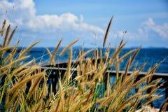 Όμορφο λιβάδι μπροστά από τη θάλασσα Στοκ φωτογραφίες με δικαίωμα ελεύθερης χρήσης