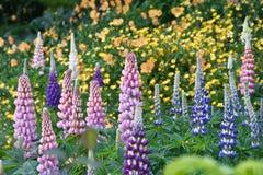Όμορφο λιβάδι Foxglove Στοκ Εικόνες