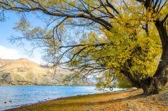όμορφο λιμνών τοπίων πολυτέλειας σύγχρονο πρωινού γιοτ Ζηλανδία wanaka μηχανών νέο ειρηνικό Στοκ Εικόνες