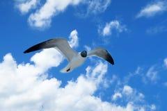 Όμορφο ισχυρό seagull στον ουρανό Στοκ Φωτογραφία