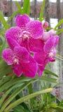 Όμορφο ιώδες λουλούδι στοκ φωτογραφία με δικαίωμα ελεύθερης χρήσης