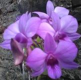 Όμορφο ιώδες λουλούδι Στοκ εικόνα με δικαίωμα ελεύθερης χρήσης
