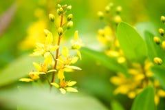 Όμορφο κίτρινο λουλούδι που ανθίζει στον πράσινο κήπο με το αντίγραφο s Στοκ φωτογραφία με δικαίωμα ελεύθερης χρήσης